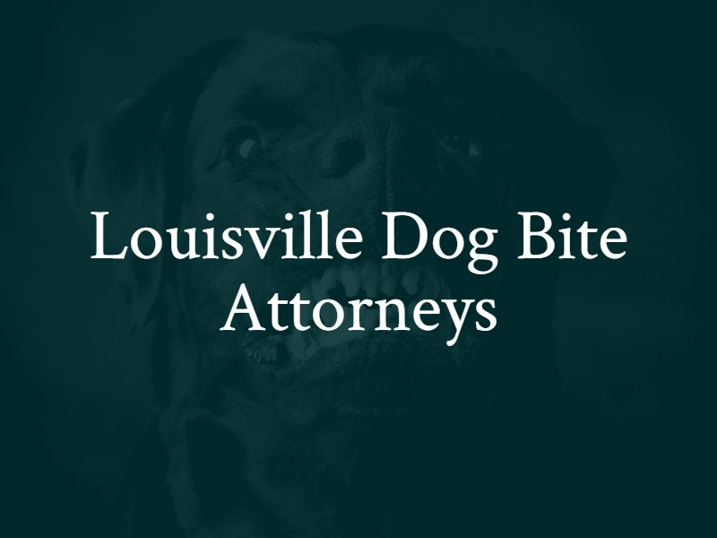 Louisville, KY Dog Bite Lawyers
