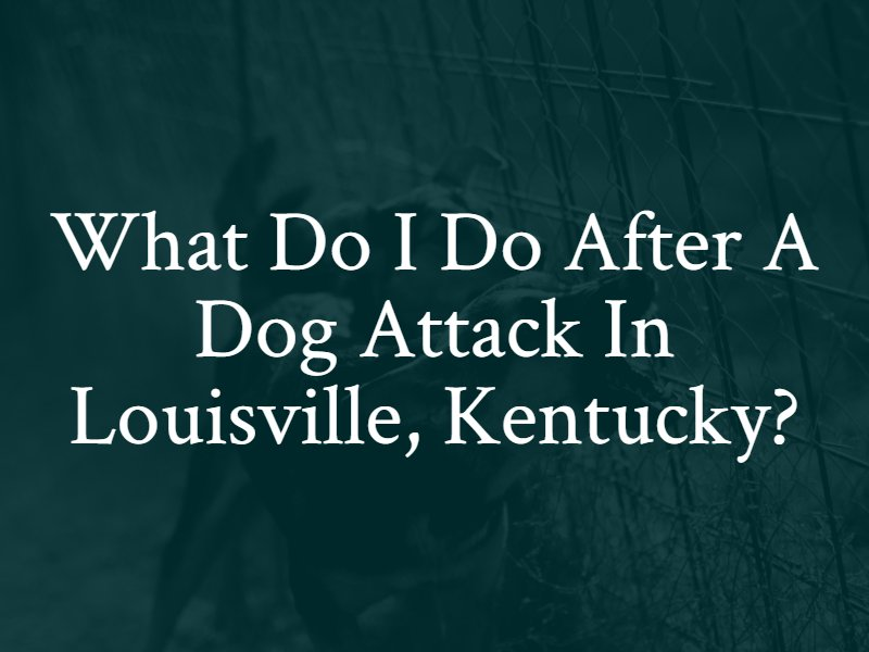 What Do i do after a Dog attack in Louisville, Kentucky?